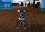 Cat Simulator Android