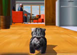 Cat Simulator 2015 Android